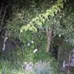 LED Lenser M1 im Dunkeln